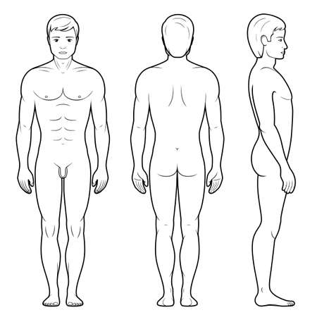 naked male body: Vector illustration of male figure - front, back and side view in outline