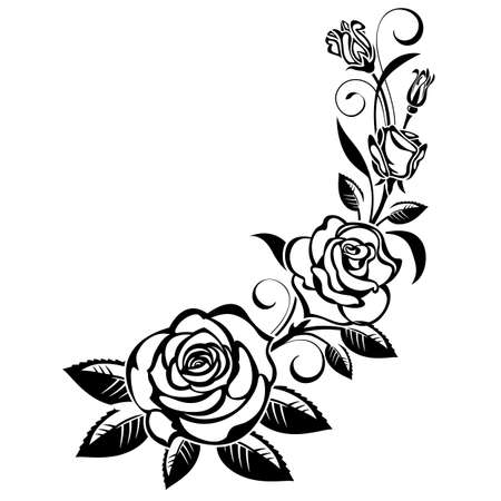 Branch of roses on a white background;