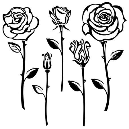 Collection of black and white roses Illustration