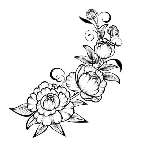 Rama de rosas sobre un fondo blanco;