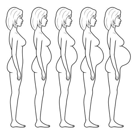 Vector illustration of stages of pregnancy of the woman. Vectores