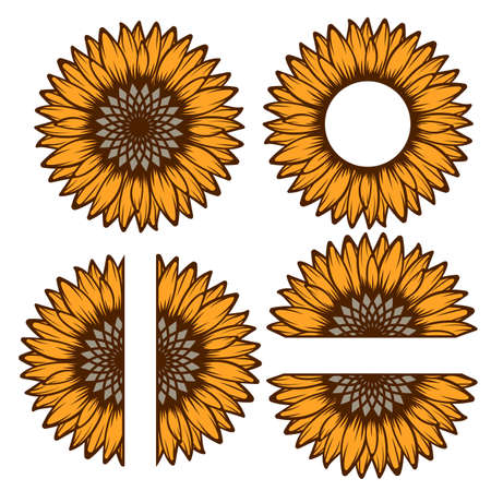 Split sunflower for design, half flower
