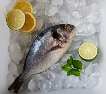 gilthead bream: Cook freeze gilt-head bream  fresh fish for further preparation, Fresh Dorada lies in the tray of ice, fishermen brought to the restaurant just caught in Oken Dourado