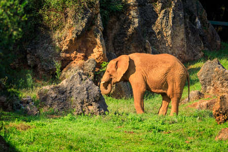 Elephant in Cabarceno Natural Park, Cantabria