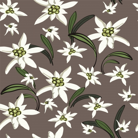 Elegance Seamless background with edelweiss flowers  Floral vector illustration  Vector