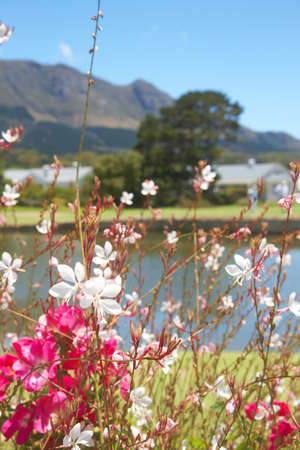 Beautiful flowers on the golf course with few houses and mountains in the background on a summer day. Focus on the flowers - shallow depth of field photo