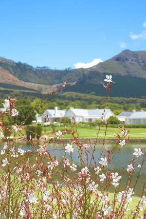 Golf course landscape with few houses in the mountains on a beautiful summer day. Focus is on the flowers infront Stock Photo - 4235330
