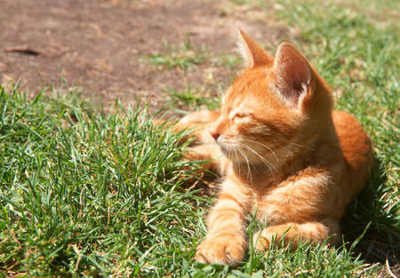 Small ginger kitten sleeping on grass on a sunny day photo