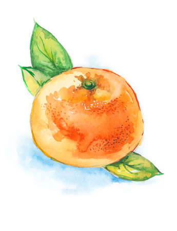 Watercolor illustration of a tangerine. Ripe mandarin or orange with green leaves isolated on white background