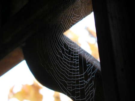 Spiderweb in de hoek van een tuinhuisje