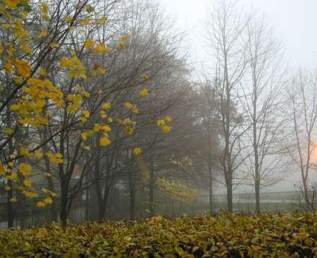 Stormy windy weather in a fall park Reklamní fotografie