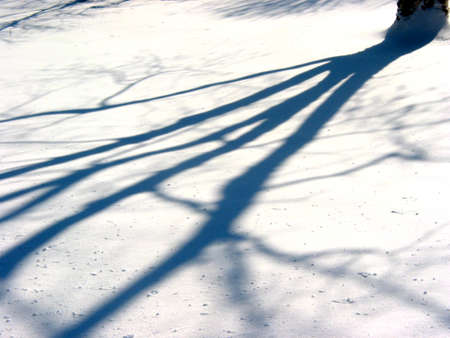 Tree shadow on the fresh untouched new snow Banco de Imagens