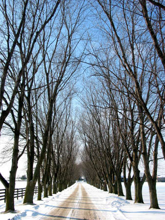 Winter tree lined lane on a snow covered farm on a sunny day Stock Photo - 352547