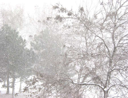 Snow storm and trees Stock Photo - 352557