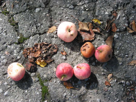 Fallen apples on the pavement Stock Photo - 352534