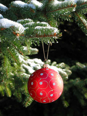 Red Christmas ball on snow covered fir tree photo