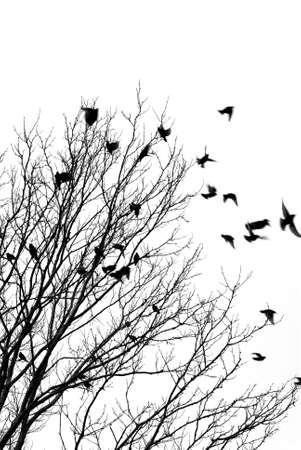 Black and white image of birds flying off a tree photo
