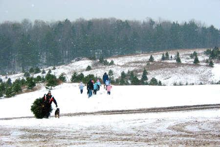 snow falling: Alla ricerca di un albero di Natale perfetto su un albero di Natale fattoria, nice fluffy caduta di neve, i fiocchi di neve visibile