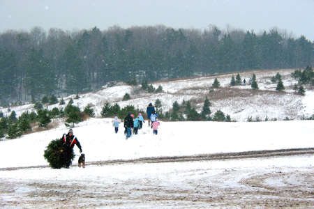 Looking for a perfect Christmas tree on a Christmas tree farm, nice fluffy snow falling, snowflakes visible photo