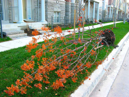 A tree lying near a sidewalk on a street ready to be planted in newly built neighborhood Stock Photo - 357382