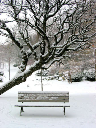 Winter bench in a park covered with snow, under a tree