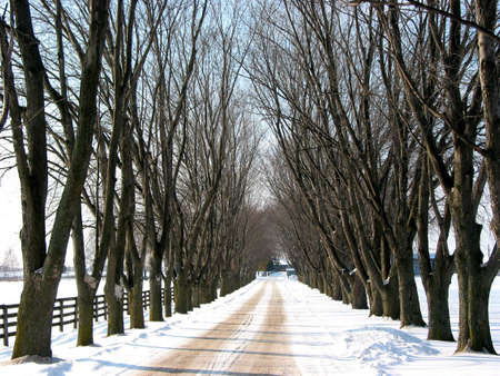 Winter tree lined lane on a snow covered farm on a sunny day Stock Photo - 357273