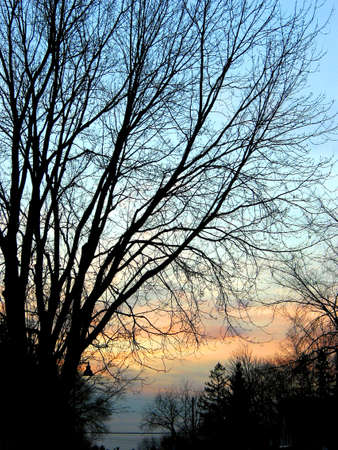 Quiet evening at the residential street, tree silhouettes against sunset background
