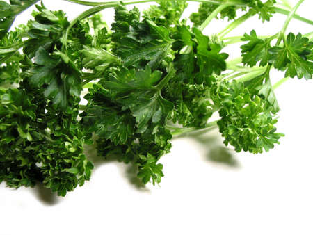 Fresh bright green parsley closeup isolated on white background photo