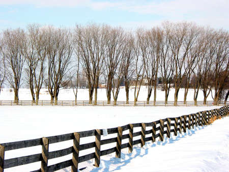 Farm fence and trees in the lane, winter Stock Photo - 366647