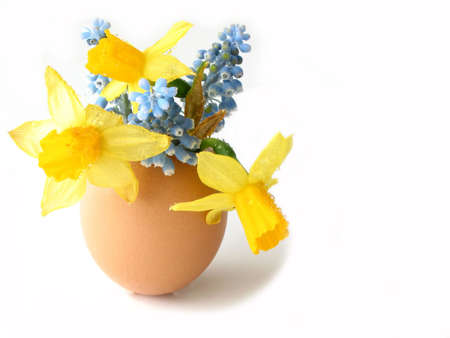 Easter arrangement: Spring flowers in egg shell on white background, space for copy photo