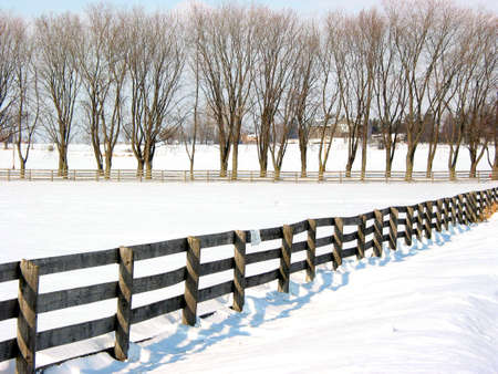 Farm fence and trees in the lane in the winter photo
