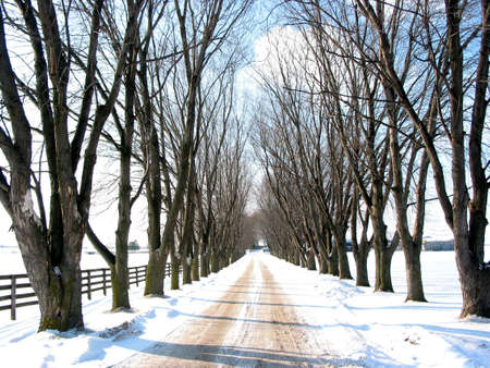Winter tree lined lane on a snow covered farm on a sunny day photo