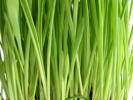 Background  of fresh green grass, macro