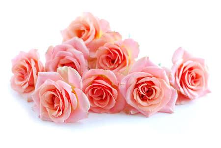 flor de durazno: Mont�n de flores de rosa rosa sobre fondo blanco  Foto de archivo