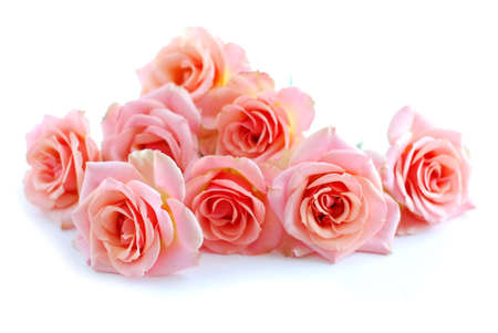 Pile of pink rose blossoms on white background photo