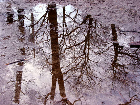 Reflection of trees in a puddle photo