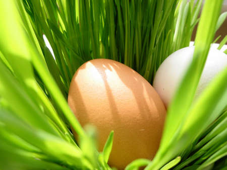 Easter eggs in very bright green fresh grass photo