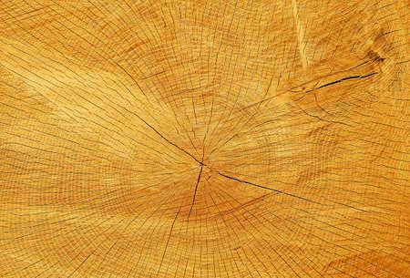 Textuur van vers gesneden boomstam