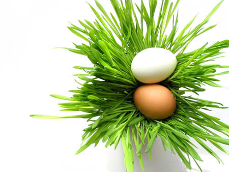 Easter eggs in green fresh grass isolated on white background photo