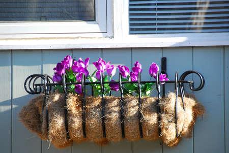 Window basket with flowers photo