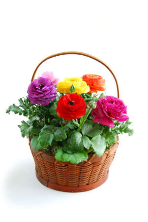 coloful: Basket of coloful flowers on white background Stock Photo