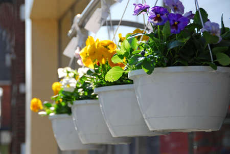 Flower baskets for sale photo