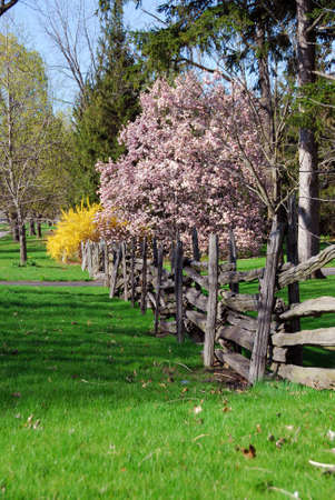 Spring landscape with blooming trees and old wooden fence photo
