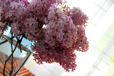 Lilac bouquet on window Stock Photo