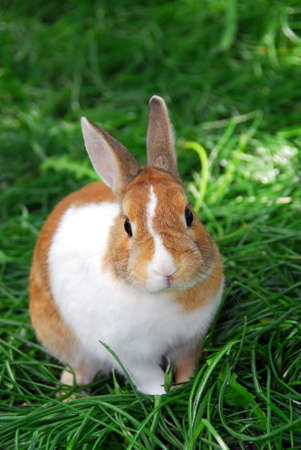 Cute bunny rabbit sitting outside in green grass Stock Photo - 422502