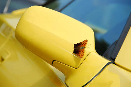 Side mirror of yellow sports car with butterfly sitting on - it landed just as I was taking the picture photo