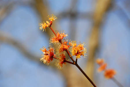 Flowering tree branch on blue sky background Banco de Imagens