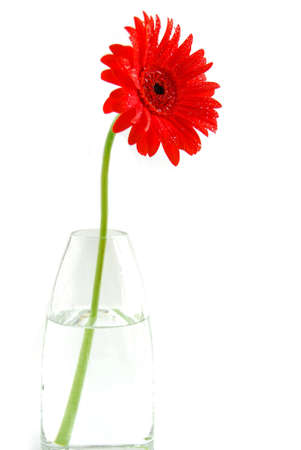 Red gerbera in a vase on white background Stock Photo - 433733