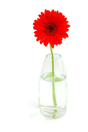 Red gerbera in a glass vase on white background Stock Photo - 433734