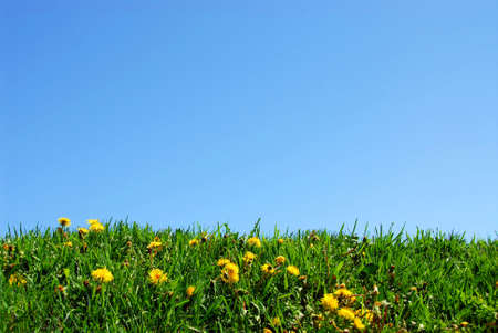 Background of grass and sky photo